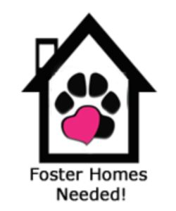 Foster-Homes-Needed-250x300